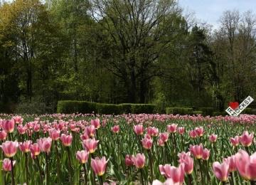 Праздник Весны и Труда в парке Фили